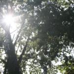 Слънцето през клоните на дървета