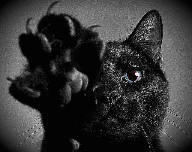 Черната котка
